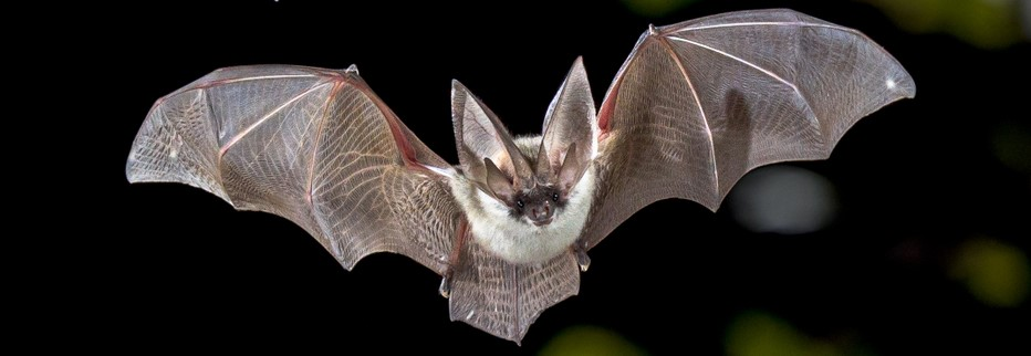 how to attract bats