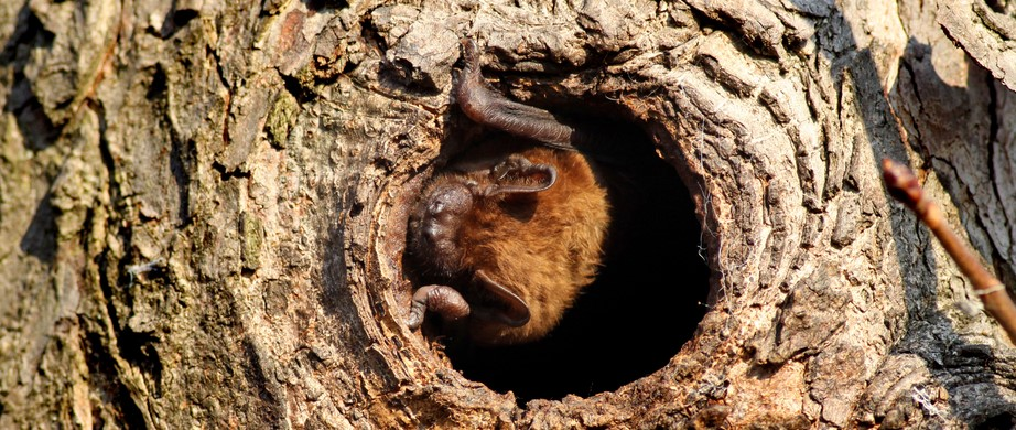attracting bats with natural roosting areas