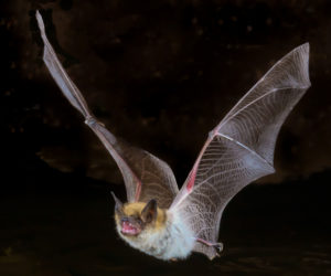 7 Easy Ways To Attract Bats To Your Yard! (2020)