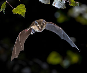 17 FUN Facts About Bats You Can't Resist! (2020)