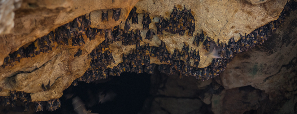 bats roosting at night