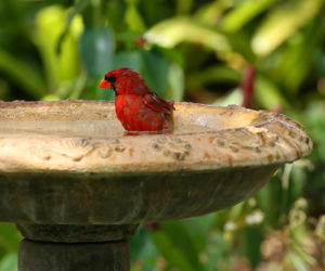 12 BEST Bird Baths To Consider In 2021! (I own #5)