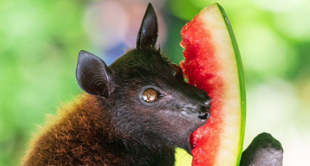 facts about bats for kids