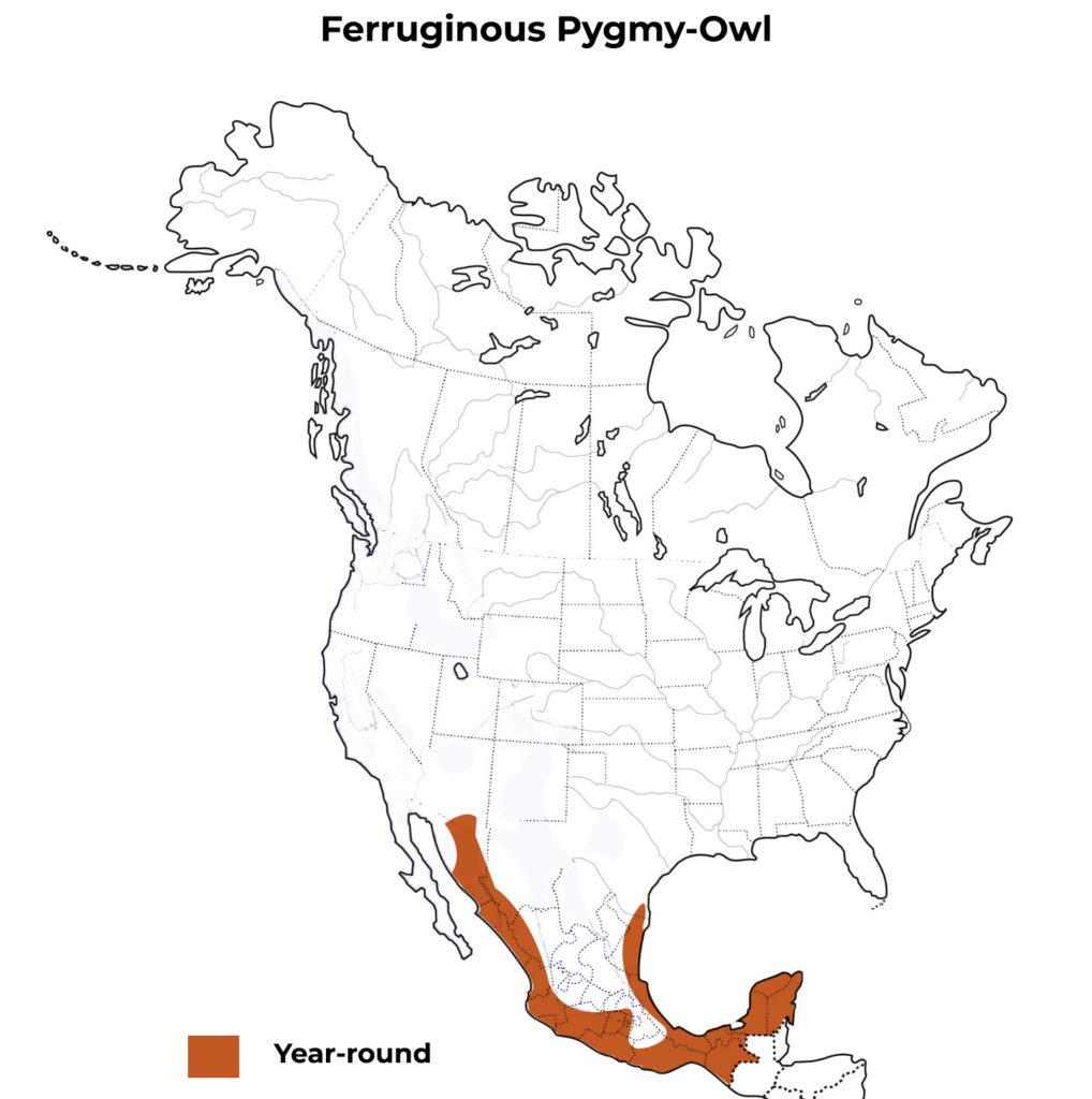 ferruginous pygmy owl range map