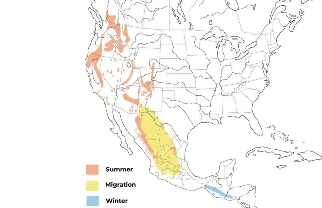 flammulated owl range map