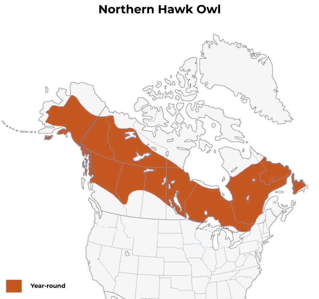 northern hawk owl range map