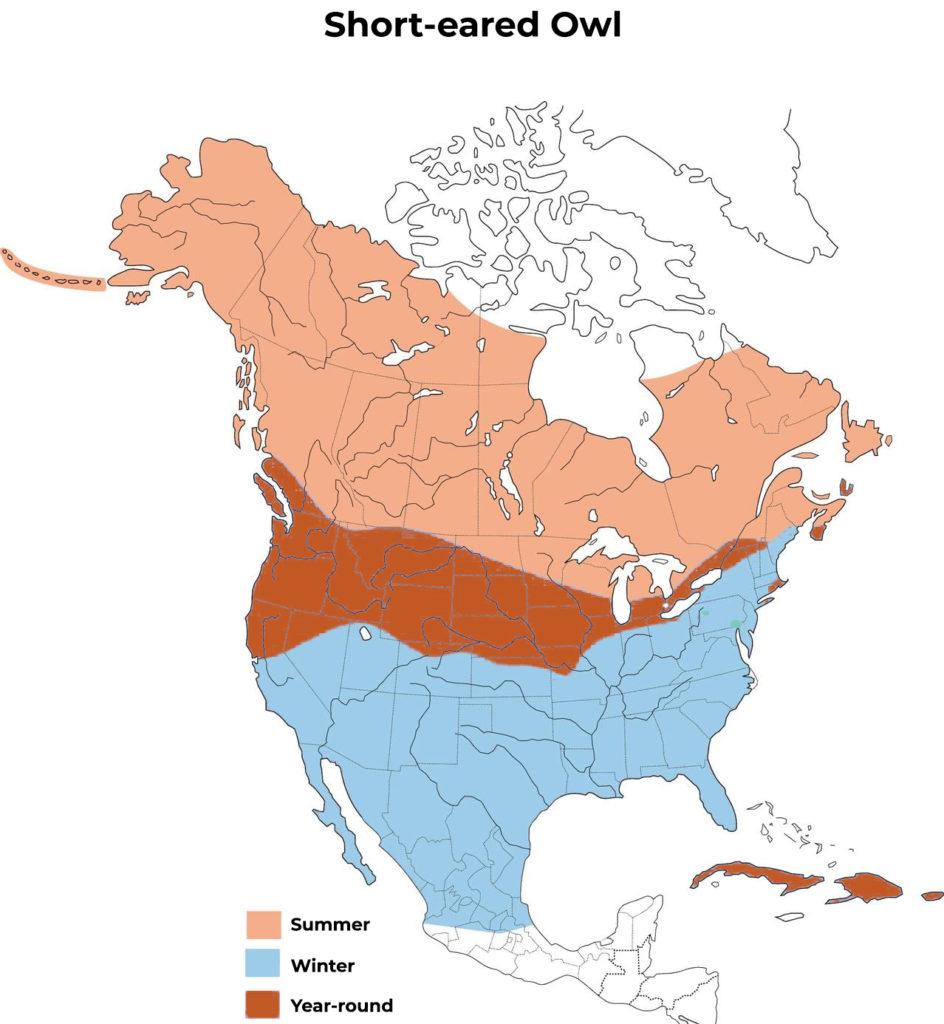 short eared owl range map