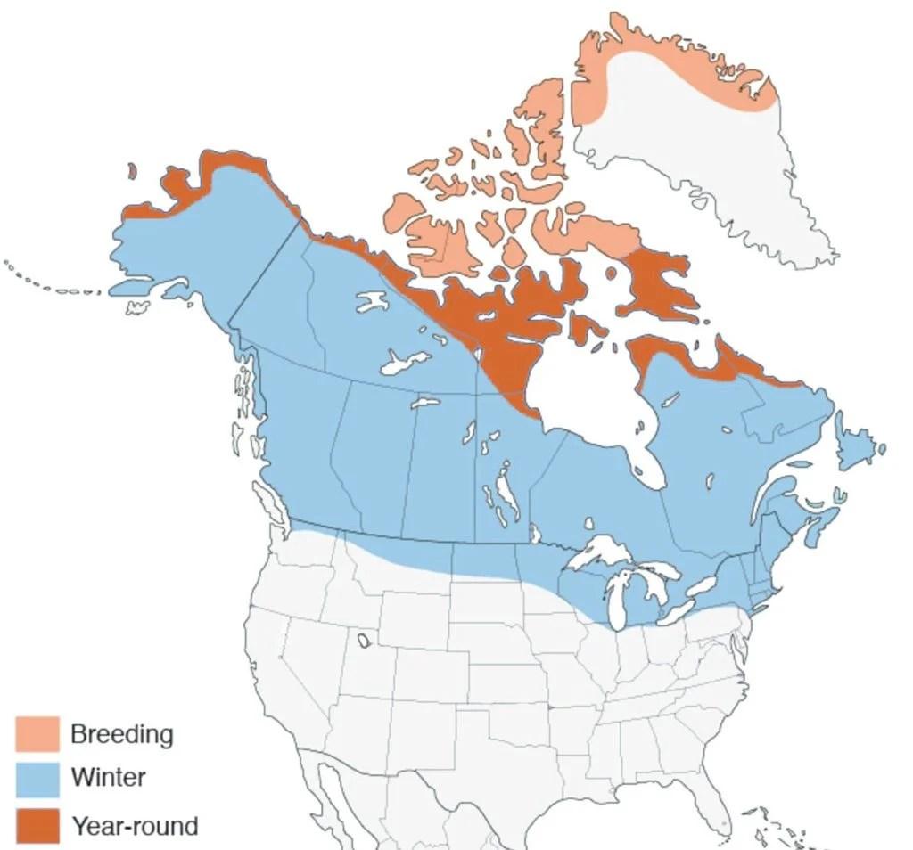 snowy owl range map
