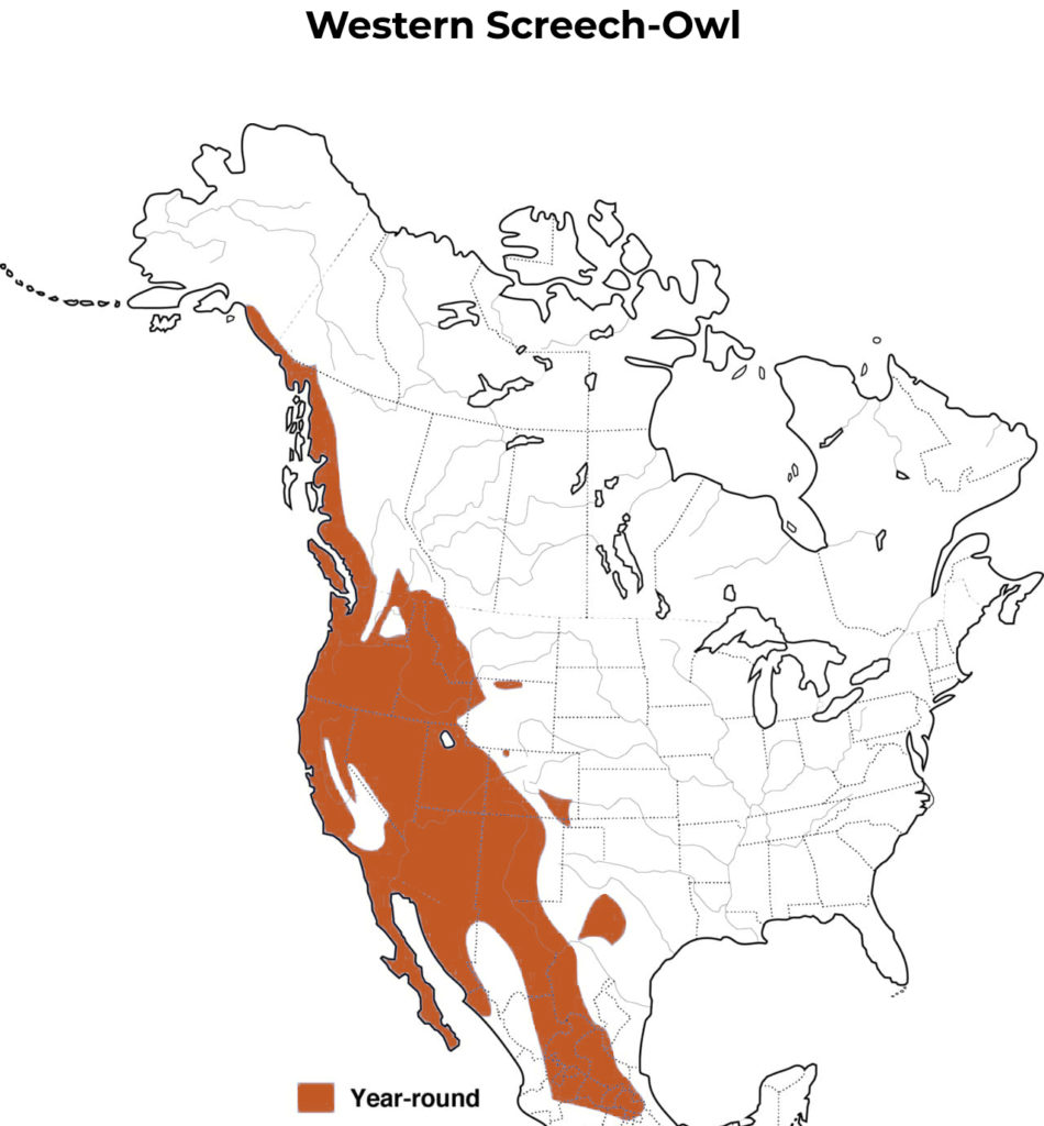 western screech-owl range map