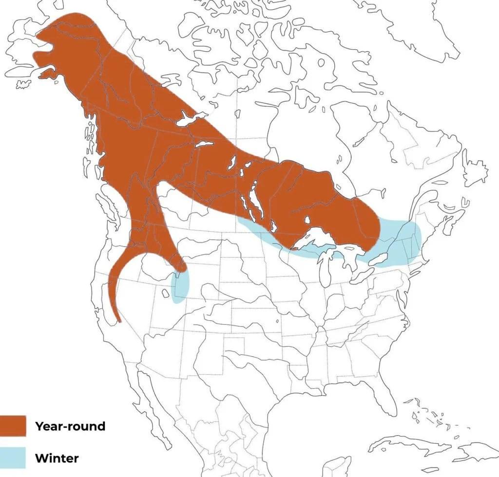 great gray owl range map