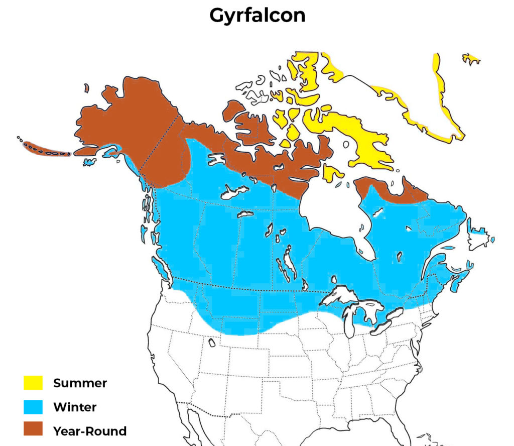gryfalcon range map