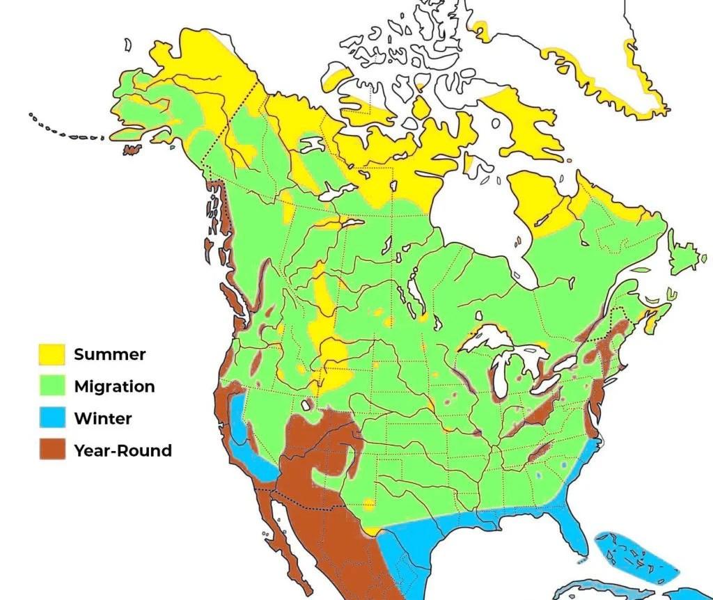 peregrine falcon range map