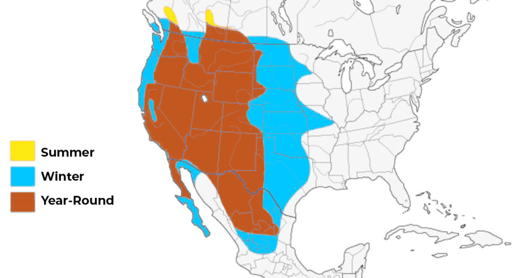 prairie falcon range map