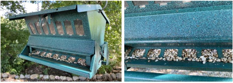 prevent bears bird feeders