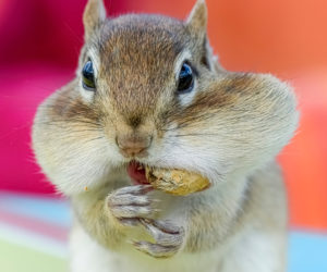 7 Ways To Keep Chipmunks AWAY From Bird Feeders! (2021)
