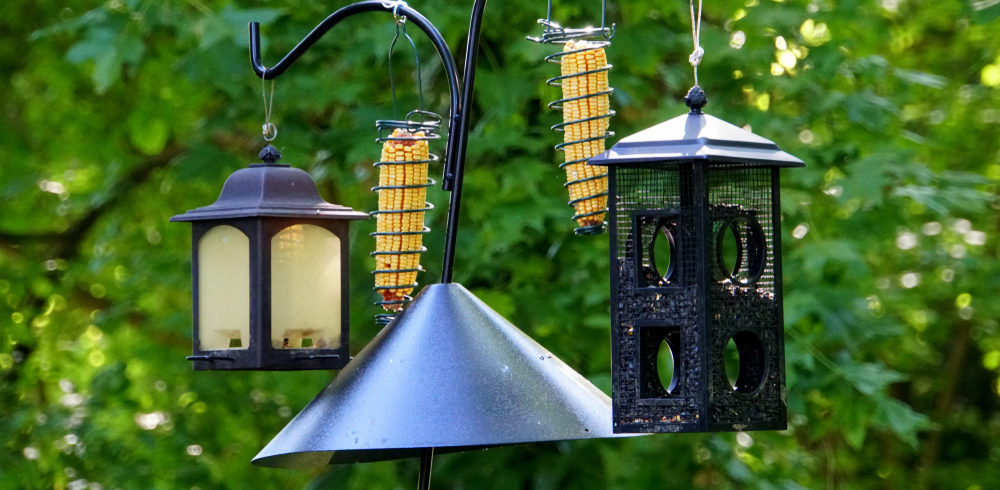 chipmunks away from bird feeding station