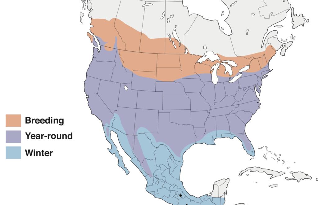 Cooper's Hawk Range Map