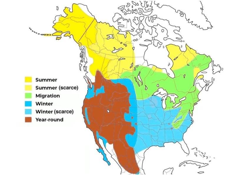 golden eagle range map