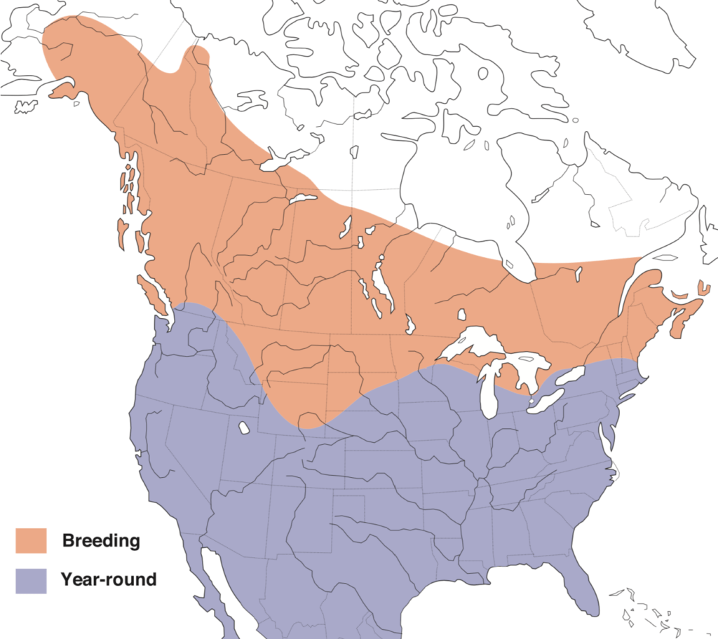 Red-tailed Hawk Range Map