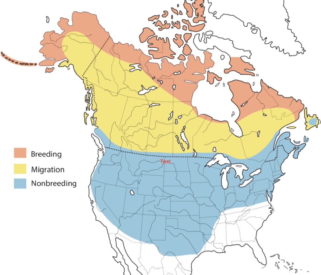 Rough-legged Hawk Range Map
