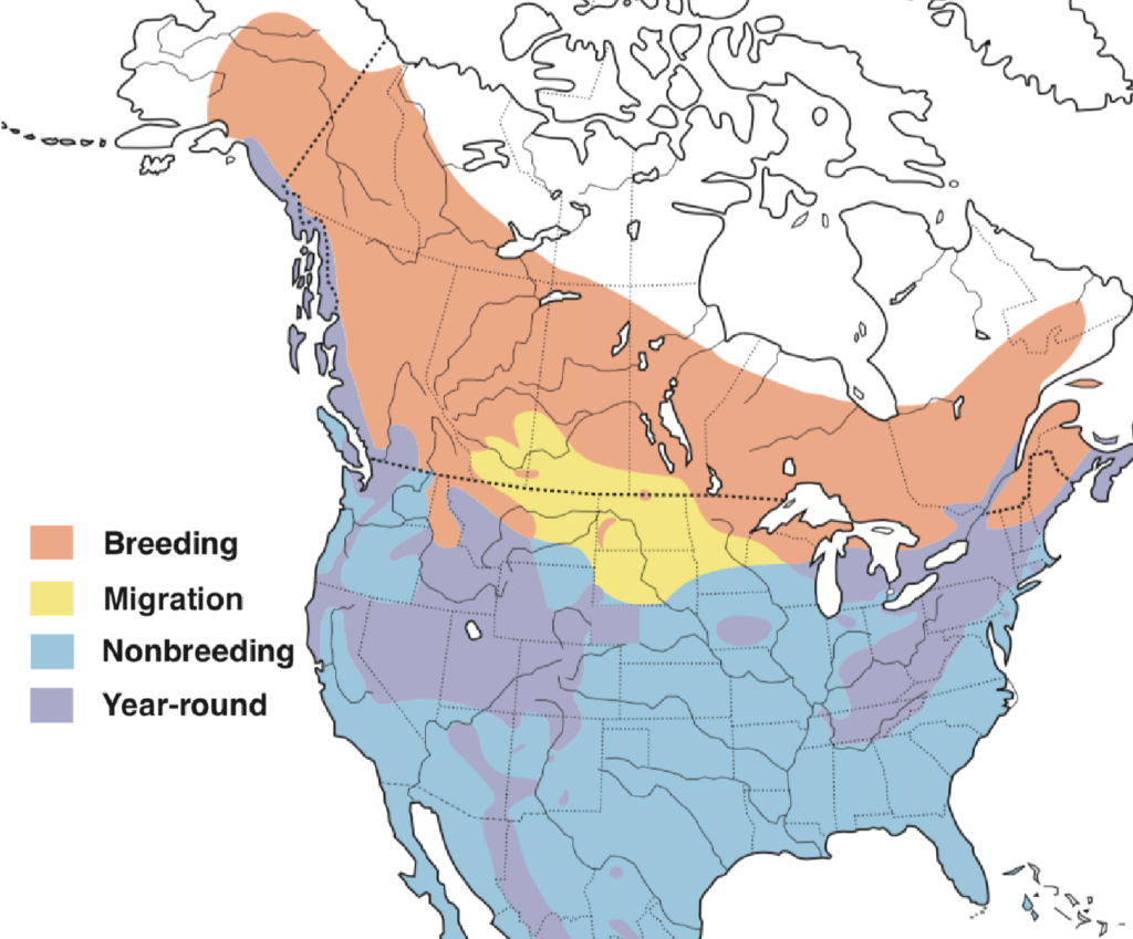 Sharp-shinned Hawk Range Map