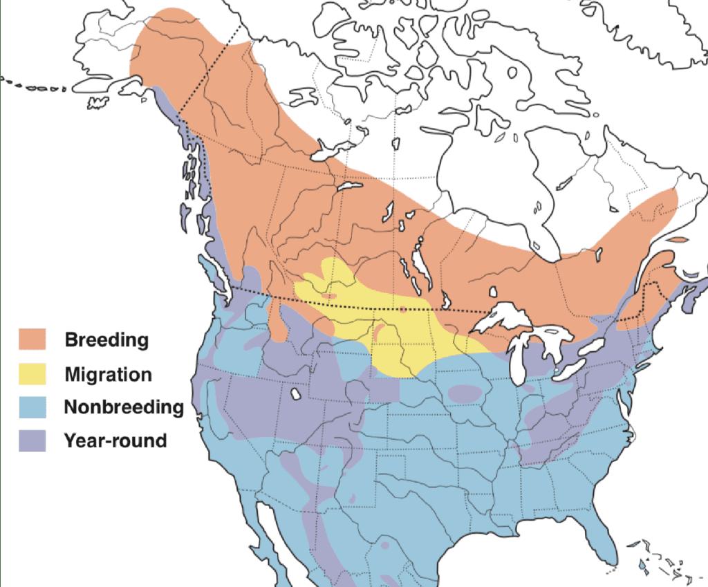 Sharp-shinned Hawk Range Map