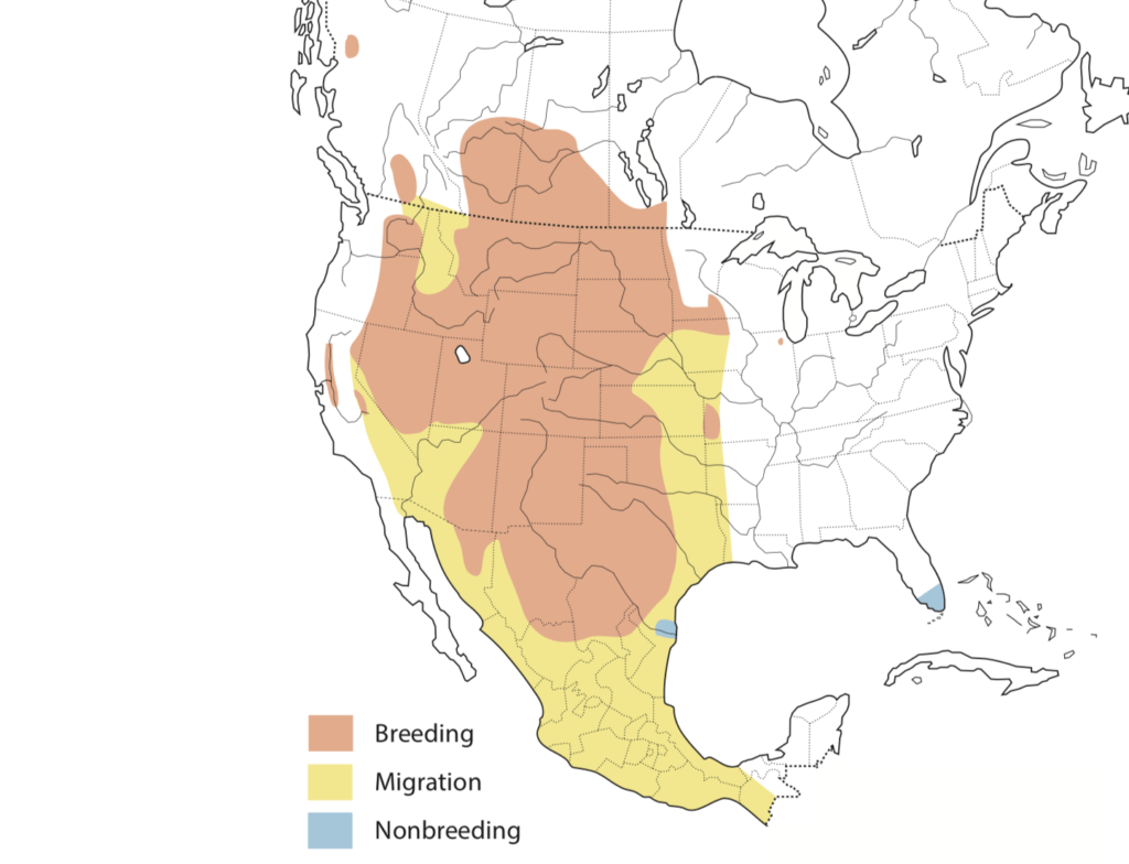 Swainson's Hawk Range Map