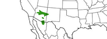 arizona gray squirrel range map