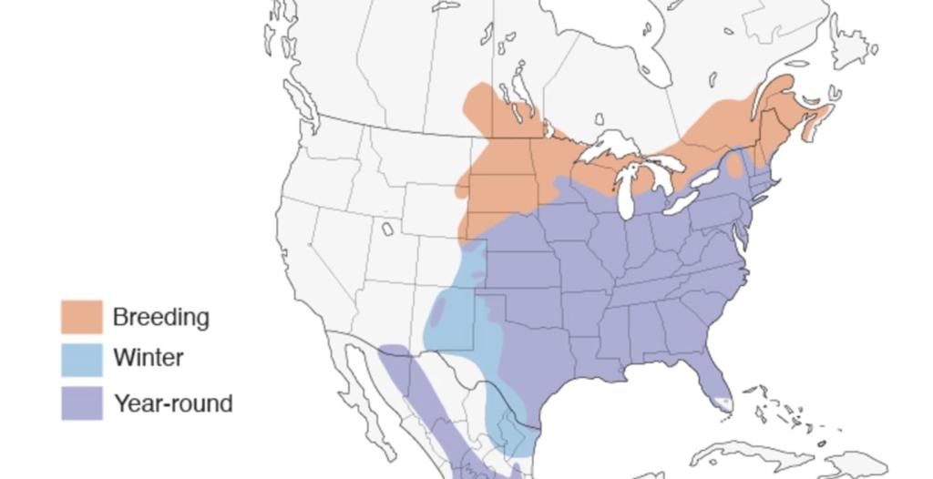 eastern bluebird range map