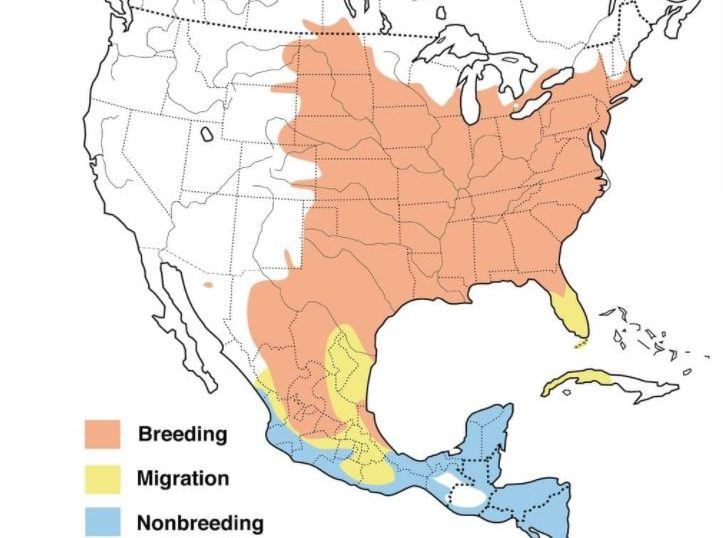 orchard oriole range map