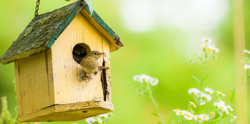 house wren hanging nest