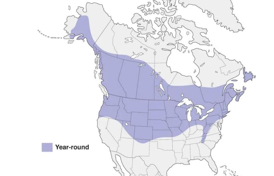 black capped chickadee range map