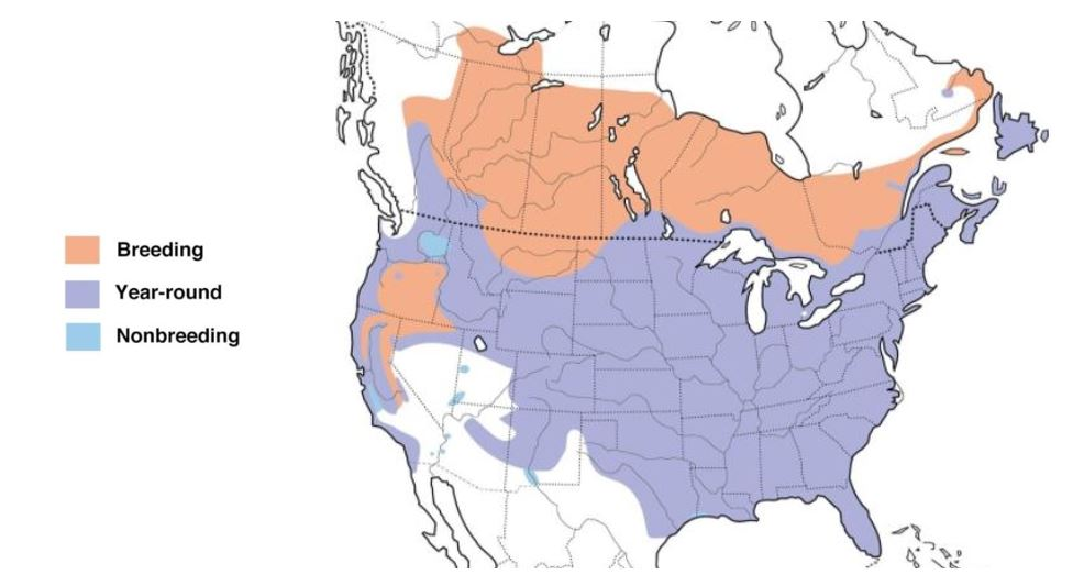 american crow range map
