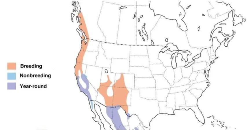 band tailed pigeon range map