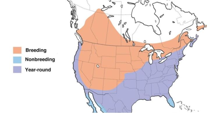 brown headed cowbird range map