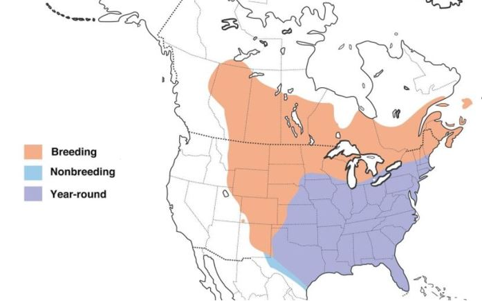 common grackle range map