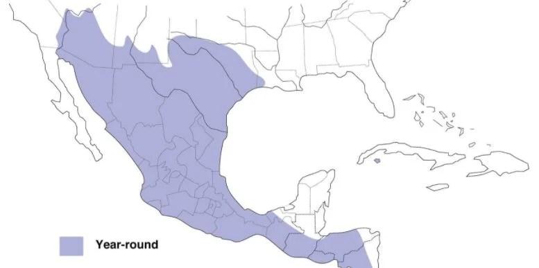 inca dove range maps