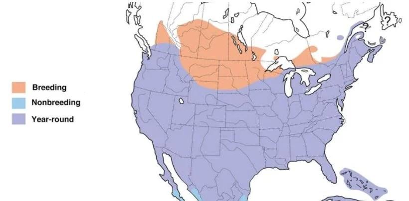 mourning dove range map