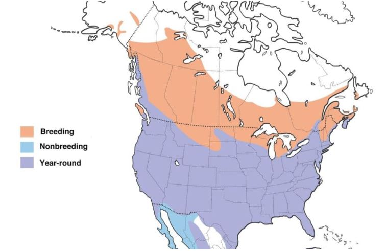 red winged blackbird range map