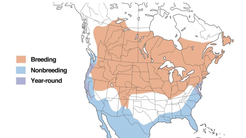 american bittern range map