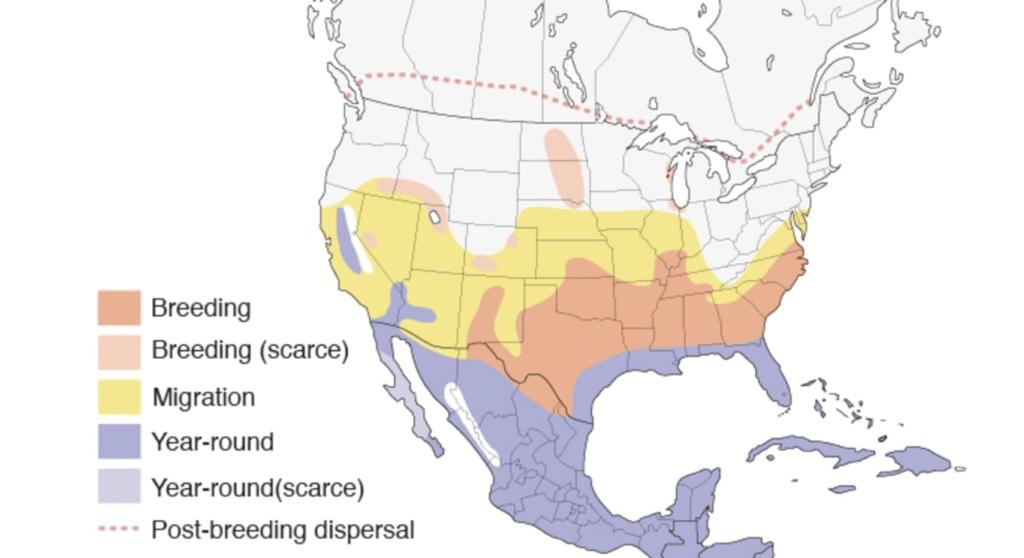cattle egret range map