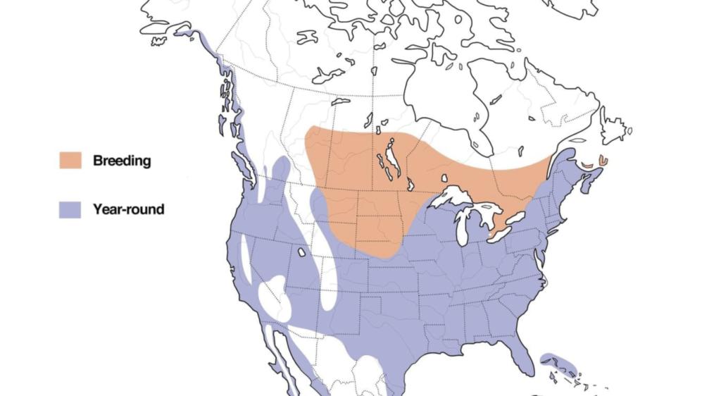 great blue heron range map