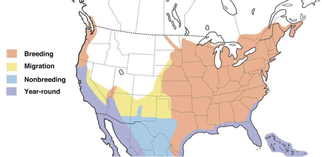 green heron range map