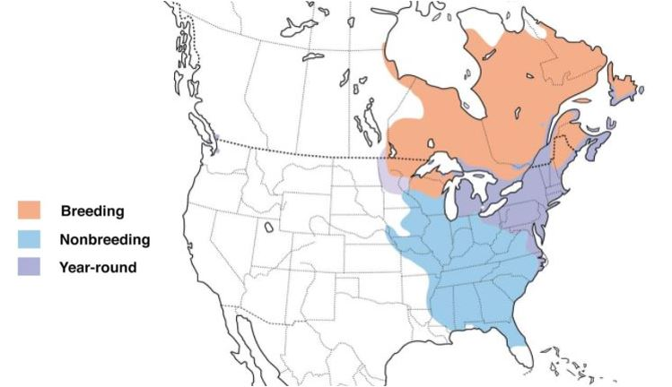 american black duck range map