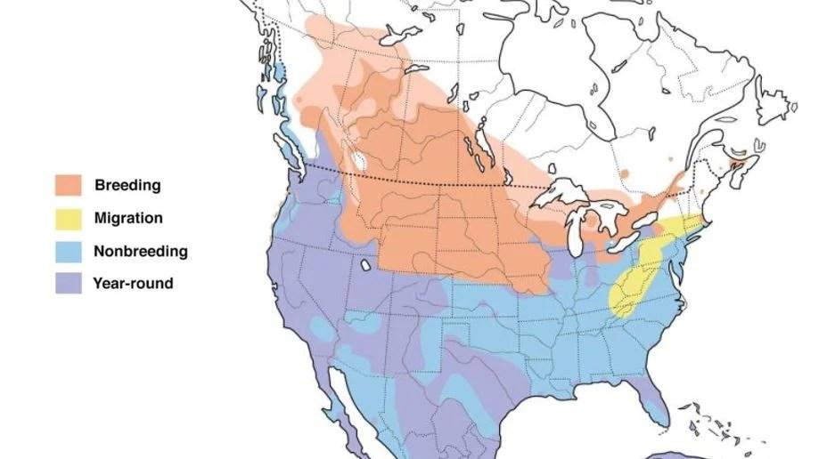 american coot range map