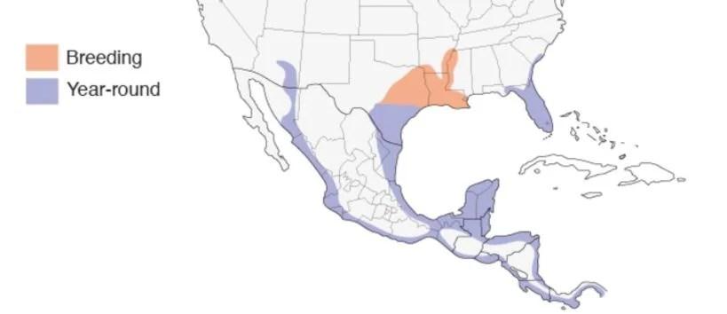black bellied range map
