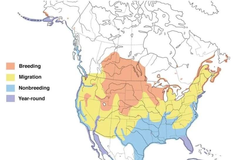 double crested cormorant range map
