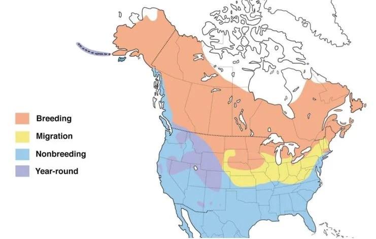 green winged teal range map