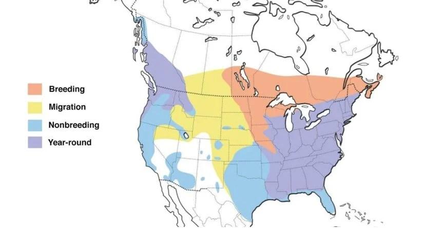 hooded merganser range map