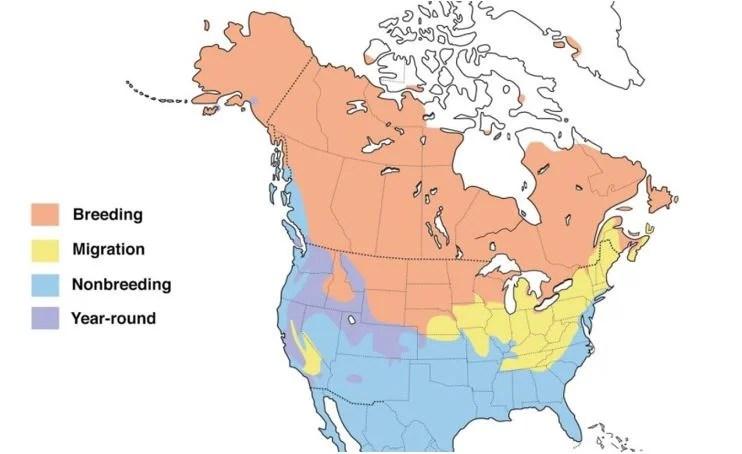 northern pintail range map